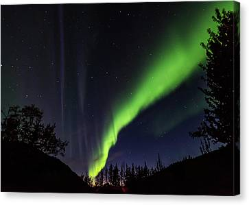 Kantishna Northern Lights In Denali National Park Canvas Print