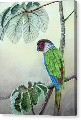 Kasanga Bajo El  Guarumo Canvas Print