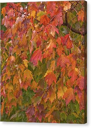 Kates Leaves Canvas Print by Michael Flood