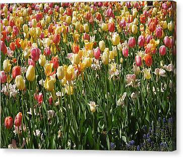 Kathy's Tulips Canvas Print by Peg Toliver