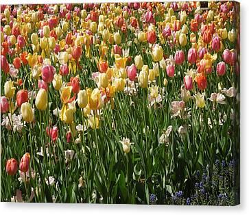 Kathy's Tulips Canvas Print
