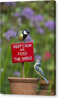 Feeding Canvas Print - Keep Calm And Feed The Birds by Tim Gainey