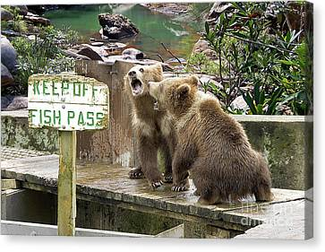 Keep Off Fish Pass  Canvas Print by Liane Wright
