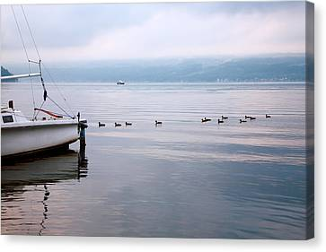 Keep Your Ducks In A Row Canvas Print by Steven Ainsworth