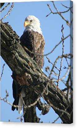 Keeping An Eye On Things Canvas Print by Dave Clark