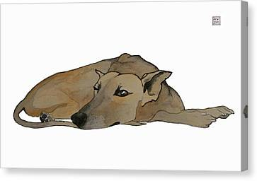 Sight Hound Canvas Print - Keeping Watch by Richard Williamson