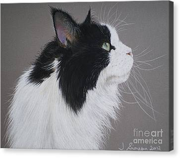 Keeps - Maine Coon Canvas Print by Joanne Simpson
