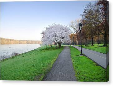 Kelly Drive Canvas Print - Kelly Drive In Spring by Bill Cannon