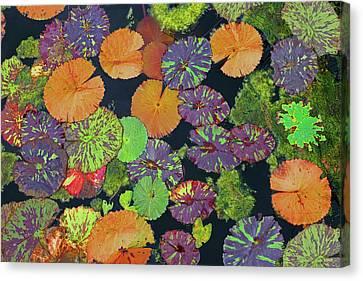 Happy Pads Canvas Print by Dana Sohr