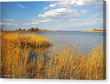 Kent Island Canvas Print by Brian Wallace