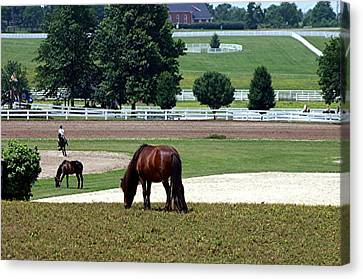 Kentucky Horse Park - Horses Grazing 2 Canvas Print by Thia Stover