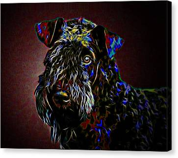Kerry Blue Terrier Canvas Print