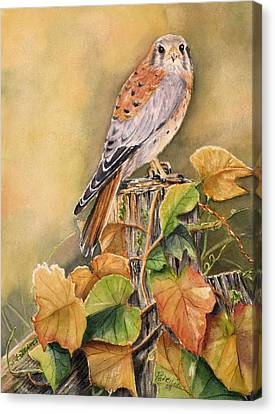 Kestrel In Fall Canvas Print by Patricia Pushaw