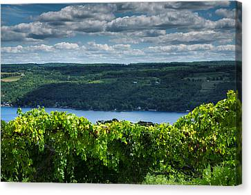 Keuka Canvas Print - Keuka Vineyard I by Steven Ainsworth