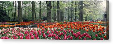 Keukenhof Garden, Lisse, The Netherlands Canvas Print by Panoramic Images