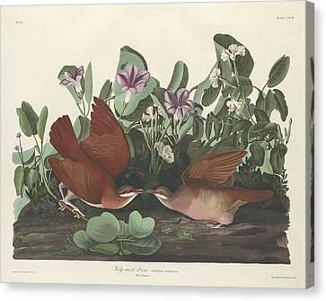 Key-west Dove Canvas Print by Anton Oreshkin