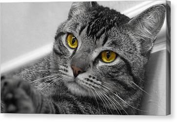 Big Cat Canvas Print - Kickin Back by Craig Incardone