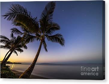Canvas Print - Kihei Maui Hawaii Palm Tree Sunrise by Dustin K Ryan