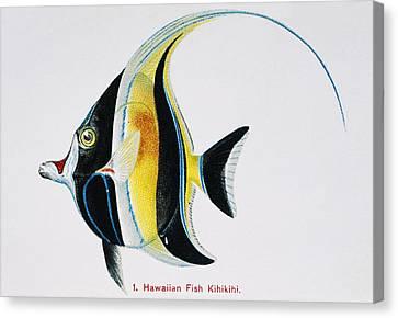 Kihikihi Canvas Print by Hawaiian Legacy Archive - Printscapes