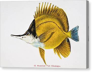 Kikakapu Canvas Print by Hawaiian Legacy Archive - Printscapes