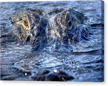 Canvas Print featuring the photograph Killer Instinct by Mark Andrew Thomas