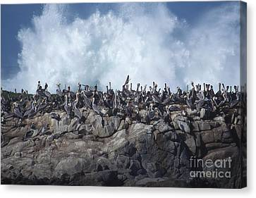 Canvas Print featuring the photograph Kinda Crowded by Stan and Anne Foster