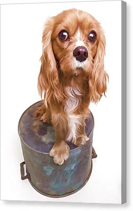 King Charles Spaniel Puppy Canvas Print by Edward Fielding