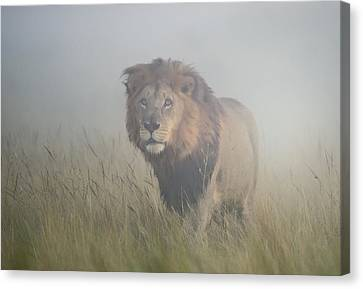 King In The Mist Canvas Print by Frits Hoogendijk