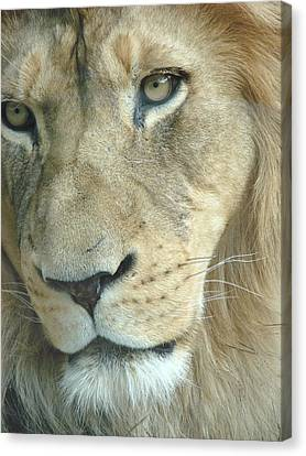 Canvas Print featuring the photograph King by Margaret Bobb