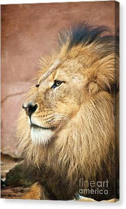 King Of The Jungle Canvas Print by Bob and Nancy Kendrick