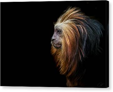 King Of The Jungle Canvas Print by Paul Neville