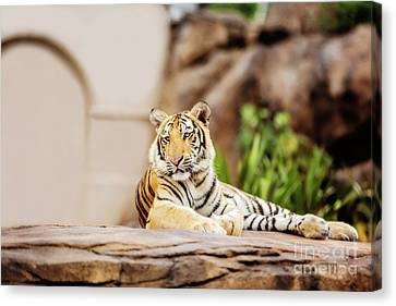 Canvas Print - It's Great To Be King by Scott Pellegrin