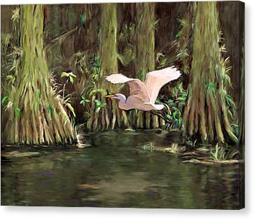 King Of The Swamp Canvas Print by David  Van Hulst