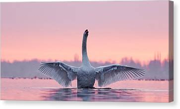 King Of The Water And The Sunset  Canvas Print by Roeselien Raimond