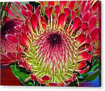 King Protea Canvas Print by Michael Durst