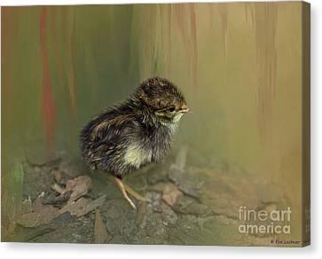 King Quail Chick Canvas Print