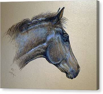 Canvas Print featuring the drawing King by Suzanne McKee