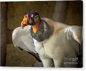 Vulture Canvas Print - King Vulture by Jamie Pham