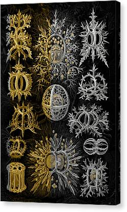 Kingdom Of Silver Single-celled Organisms  Canvas Print by Serge Averbukh