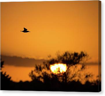 Kingfisher At Sunset Canvas Print