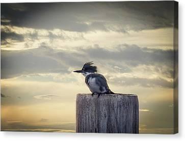 Kingfisher At Sunrise Canvas Print