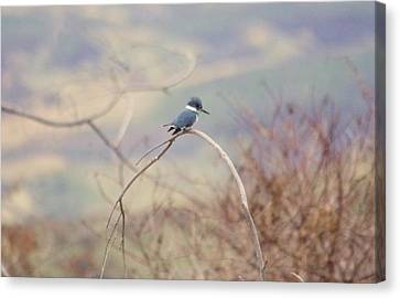 Rare Bird Canvas Print - Kingfisher On A Branch by Jeff Swan