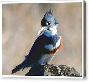 Kingfisher Canvas Print by W Gilroy
