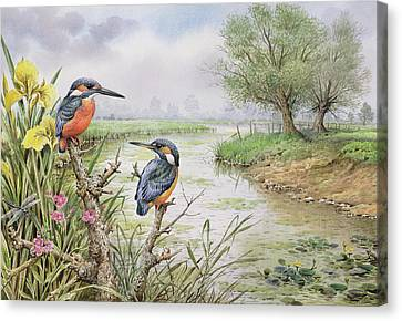Kingfishers On The Riverbank Canvas Print by Carl Donner