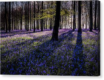 Kings Wood Bluebells Canvas Print by Ian Hufton