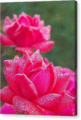 Kissed By Dew Canvas Print