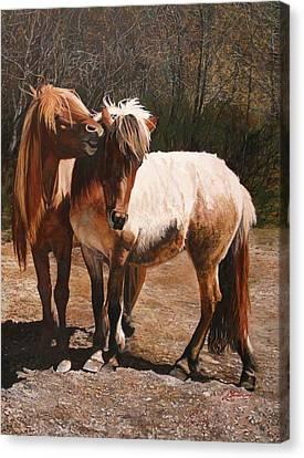 Kissemmee - Icelandic Horses Canvas Print by Susie Gordon