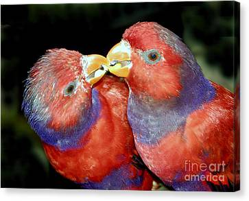 Kissing Birds Canvas Print by David Lee Thompson