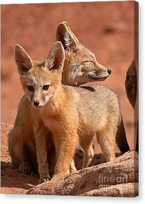 Kit Fox Mother Looking Over Pup Canvas Print by Max Allen