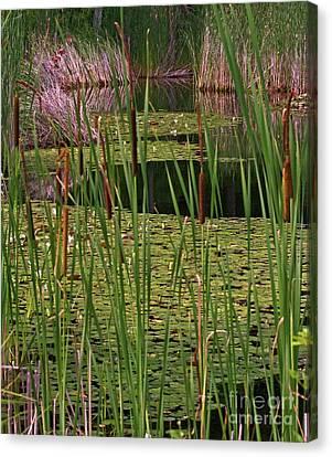 Kittatiny Spring Canvas Print by Robert Pilkington